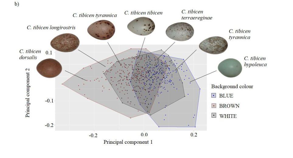 A representation of the eggs within spectroscope colour space - via Kiara LHerpiniere
