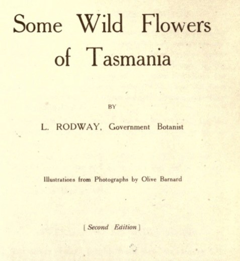 Illustrations from Rodway -Some Wildflowers of Tasmania - by Olive Barnard 41.56