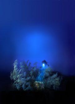 Corail_noir_dans_ la_pénombre _Copyright_Laurent Ballesta_GOMBESSA_V_Planète_Méditerranée