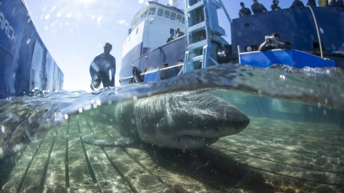Ulysse Nardin has sharks on its radar