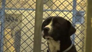 benny-shelter-dog-rescue