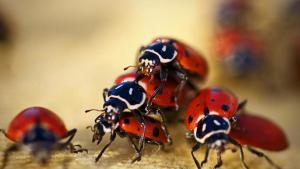 ladybugs-live_b1b1fafb15fc120c