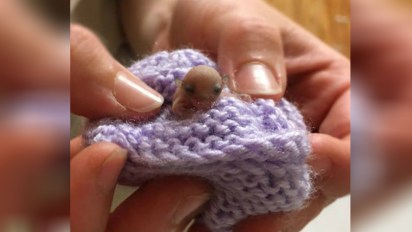 feathertail-glider-rescued