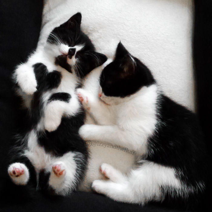 © Bored Panda via Izzy & Zoë The Cats sur Instagram