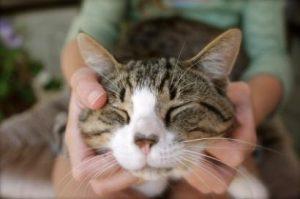 cat-behavior-9