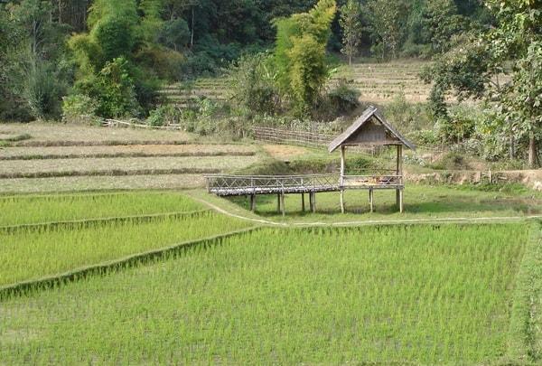 riziere Thailande