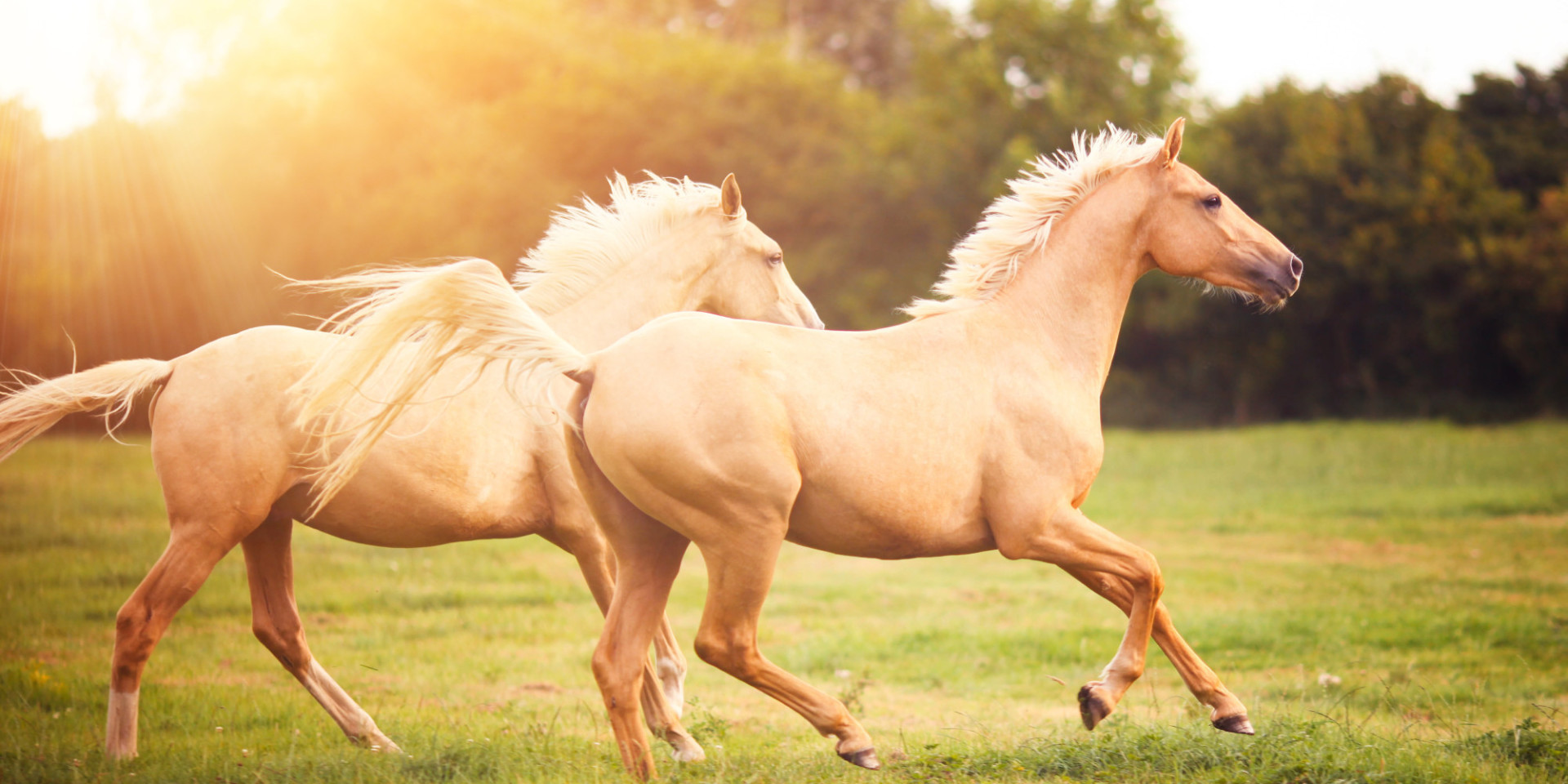 awesome-horses-running