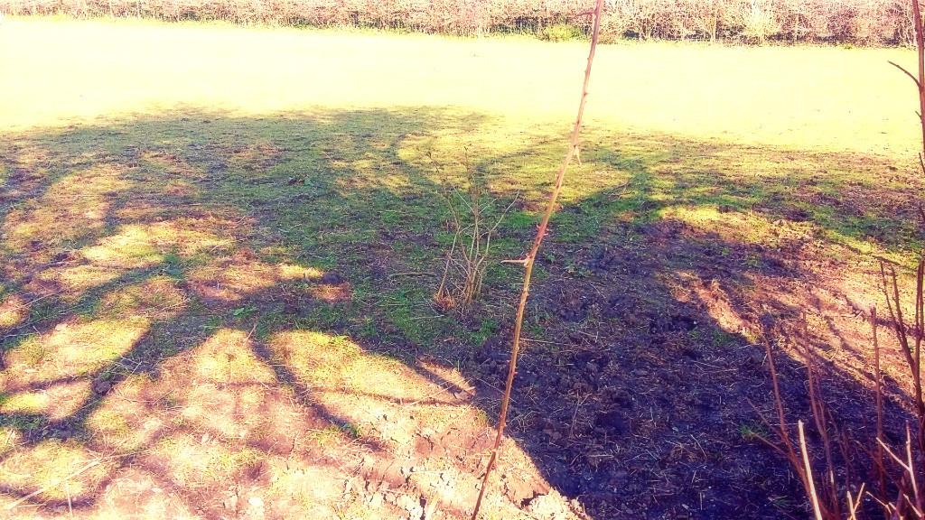 tree-shadows-x