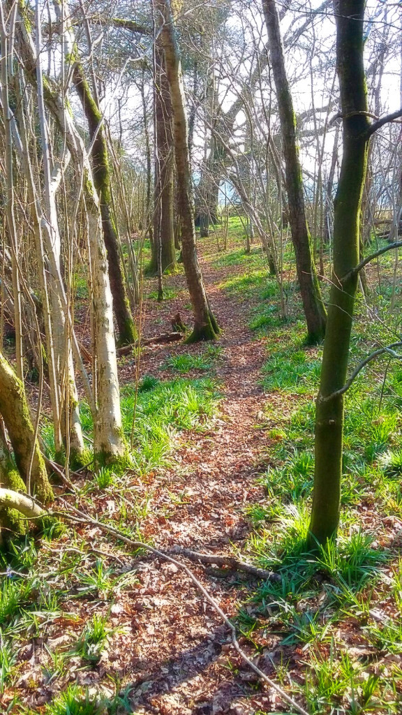 walking-in-the-woodland
