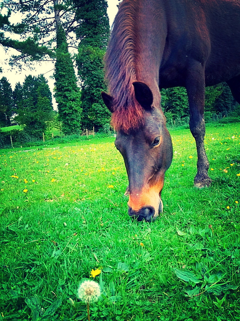 bubba-horse