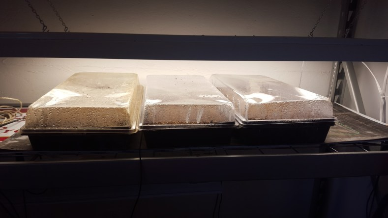Starting seed in trays under grow lights