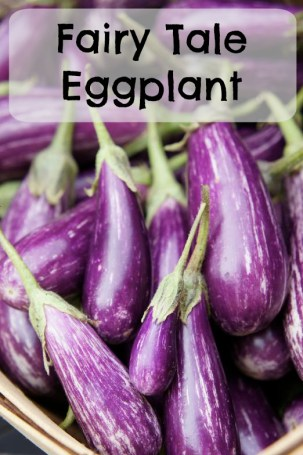 Fairytale Eggplant for the market garden