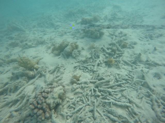 Broken-Coral