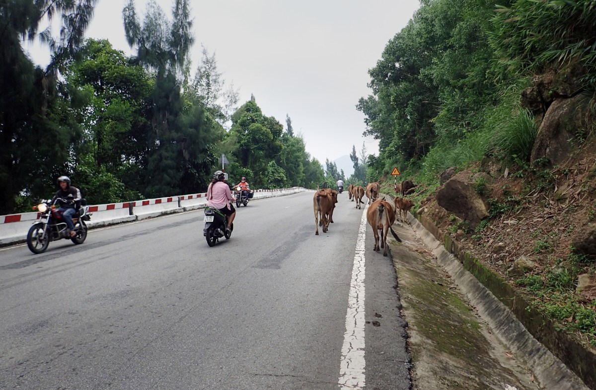 motorcycles driving along the chaotic Vietnamese highways