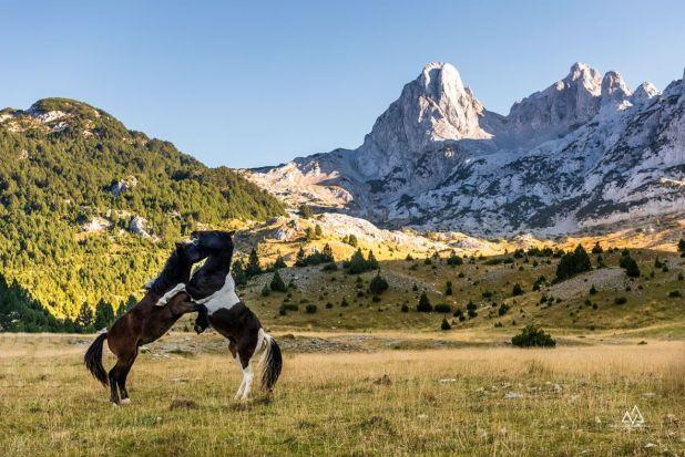 Predivni Prenj i Bosanski brdski konji - undefined