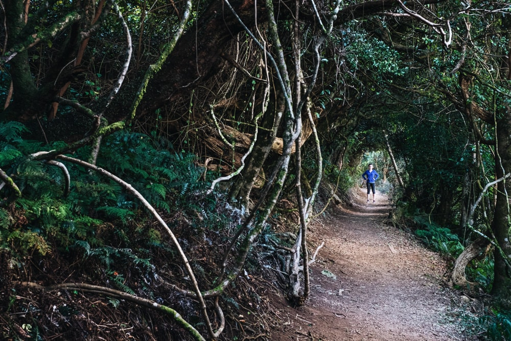 Crisp Air And Towering Trees // Bunya Mountains(QLD), Harry Candlin,, tree tunnel, person, branches, path, hero