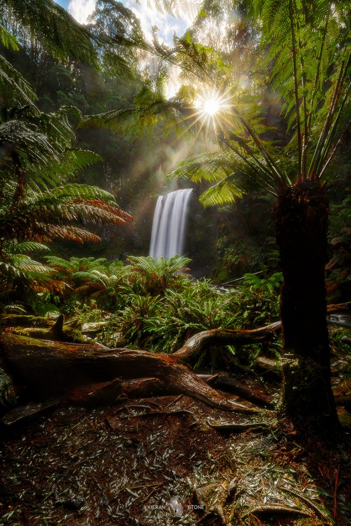 Photographing The Great Ocean Road (VIC) Keiran Stone, 2_hopetoun_falls, waterfall. forest, fallen tree, root, sunburst
