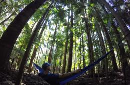 A Tiny Hidden Gem // Yarriabini National Park (NSW) Calumn Hockey palm relaxing, hammock, trees, green