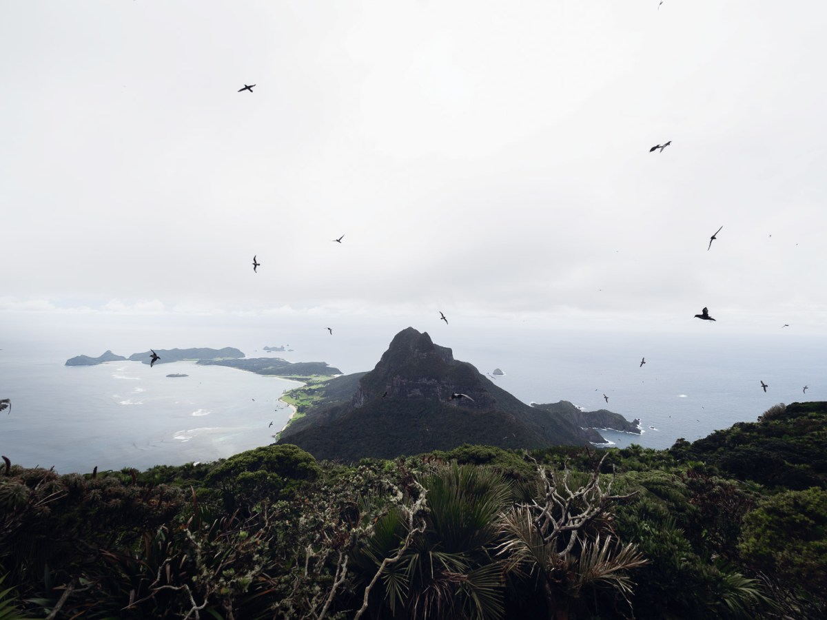 Lord Howe Island's Photography Hot Spots, Matt Horspool, birds, wildlife, ocean
