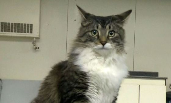 Imaginea articolului O pisică a fost trimisă, accidental, la 1.100 de km distanţă