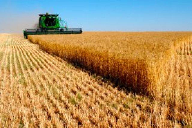 На Юге Украины стартовала уборка зерновых, – Минагрополитики
