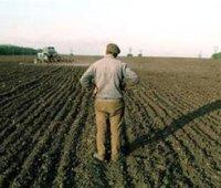 Кабмин начал передачу общинам земель за пределами населенных пунктов