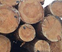 Рада ввела уголовное наказание за контрабанду древесины и запрет на экспорт дров