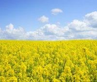 Рада вернула возмещение НДС при экспорте сои и рапса для производителей