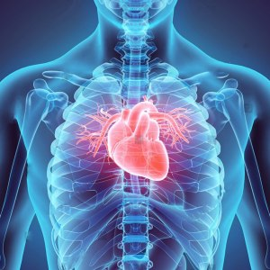 Heart and Cardiovascular Support