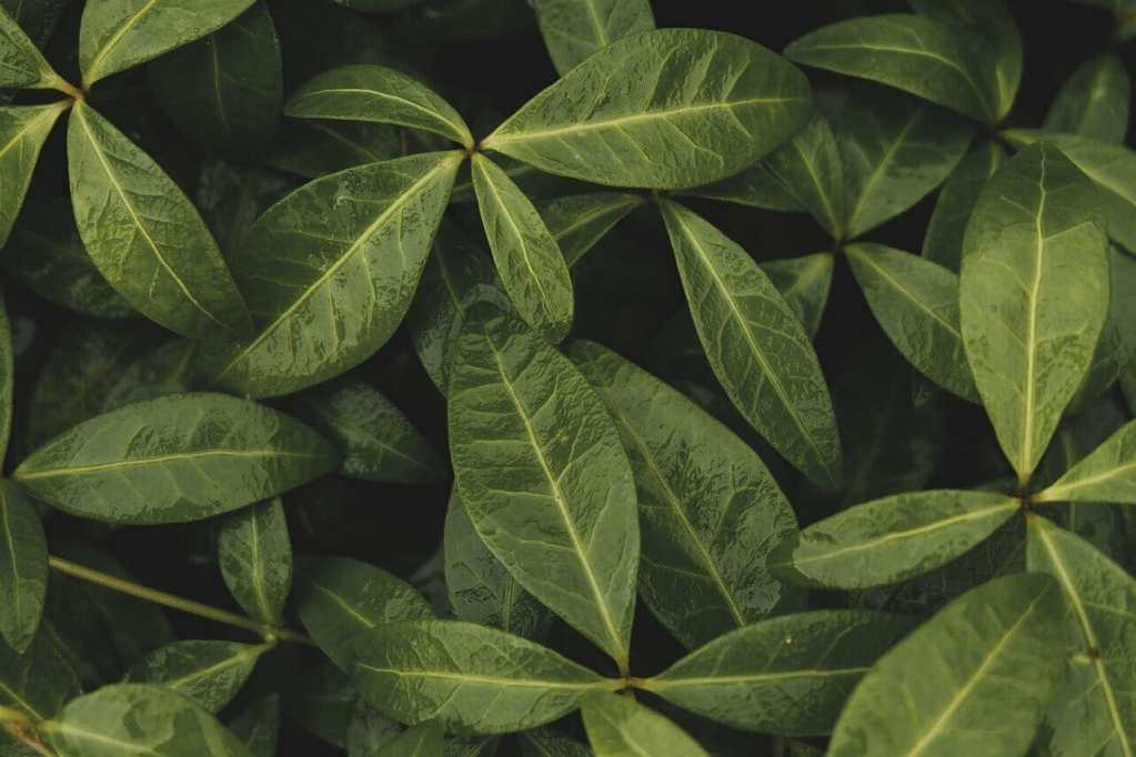 leaves, plant, foliage