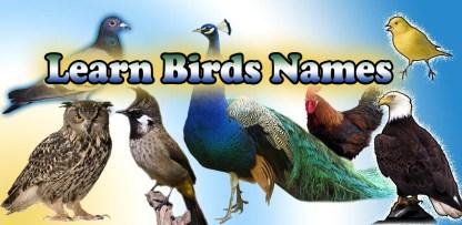 Birds name in English (1)
