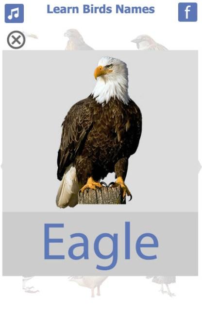 Birds name in English (8)