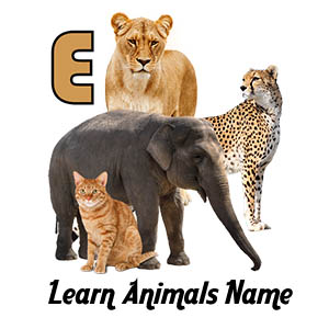 Learn Animals Name Animal Sounds Animals Pictures Thumbs