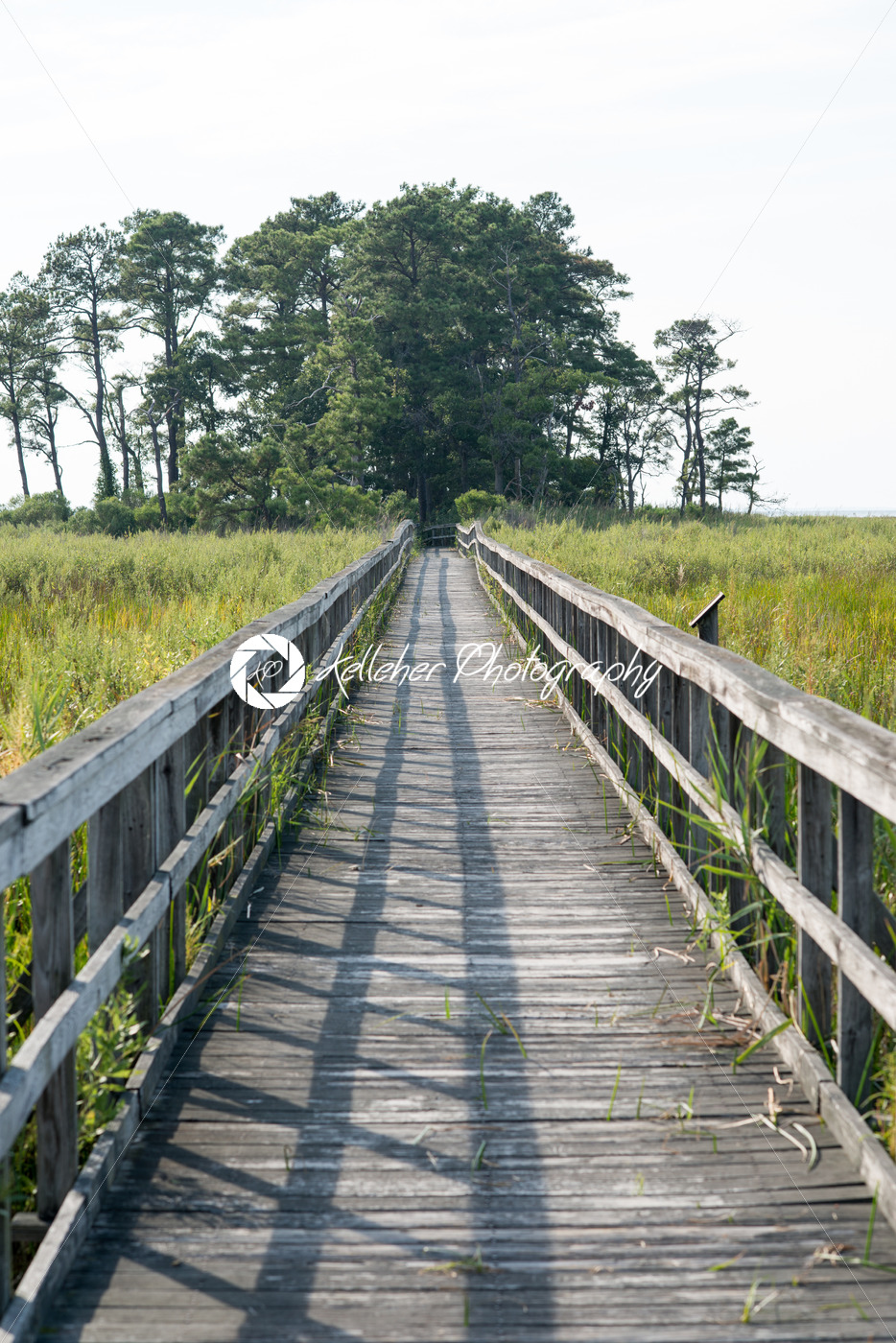 Boardwalk through marsh reeds near Rock Hall, MD - Kelleher Photography Store