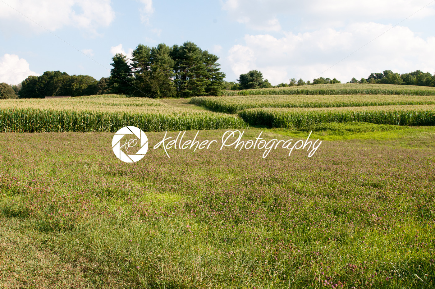 Green open space with mature trees on a sunny day with light clouds at Stroud Preserve - Kelleher Photography Store