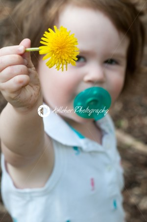 Young toddler girl holding up a dandelion - Kelleher Photography Store