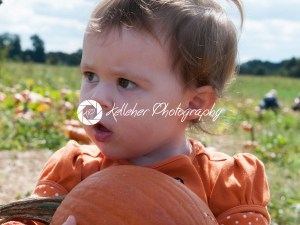 Young toddler girl outside holding a pumpkin with pumpkin fields in the background - Kelleher Photography Store