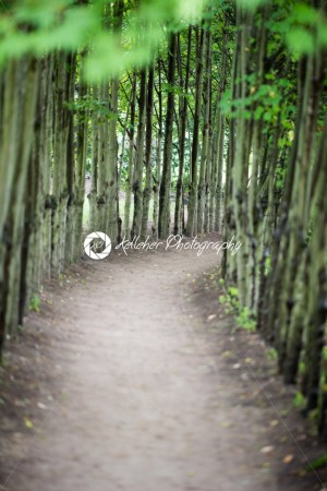 Dirt walk way path lined with thin trees on both sides - Kelleher Photography Store