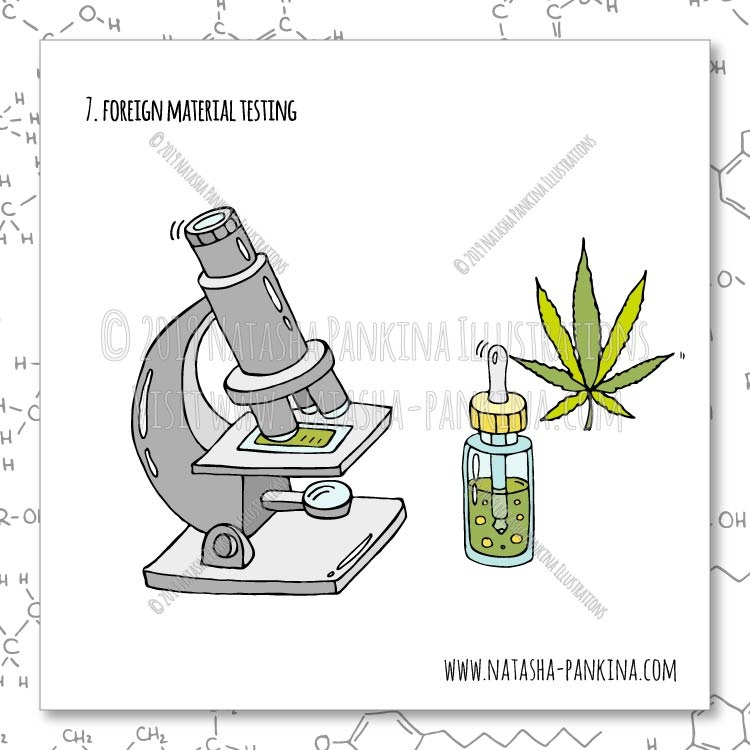 description: Hand Drawn Illustration of Foreign Material Testing  keywords: bag, ban, cannabidiol, cannabis, cartoon, cbd, cbd oil, chemical formula, chemistry, design, design element, doodle, flat, freehand drawing, graphic, hand, hand drawn, icon collection, icon set, illustration, isolated, joint, laboratory, laboratory equipment, leaf, legal concept, legalization, lighter, marijuana, marijuana leaf, marijuana plant, medical marijuana, molecule, object, outlined, packaging, pipe, set, sign, sketch, smoke, speech bubbles, steam, stop, symbol, syringe, tube, vector, vector elements, weed, analysis, laboratory, lab, cannabinoids, testing, moisture content, residual solvents, processing chemicals, pesticides, microbial impurities, homogeneity, edible, cannabis products, foreign material, terpenoids, mycotoxins, heavy metals, water activity, solid, semi-solid edibles, THC, delta-9 THC, CBD, natasha pankina  illustrator: Natasha Pankina Natasha Pankina https://store.natasha-pankina.com/copyright-notice-per-image-metadata/