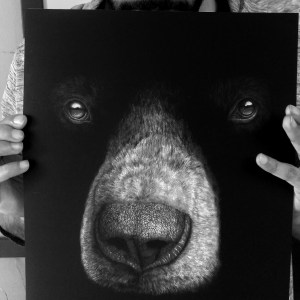 Ursus Americanus Black Bear Pencil Drawing Limited Edition Print
