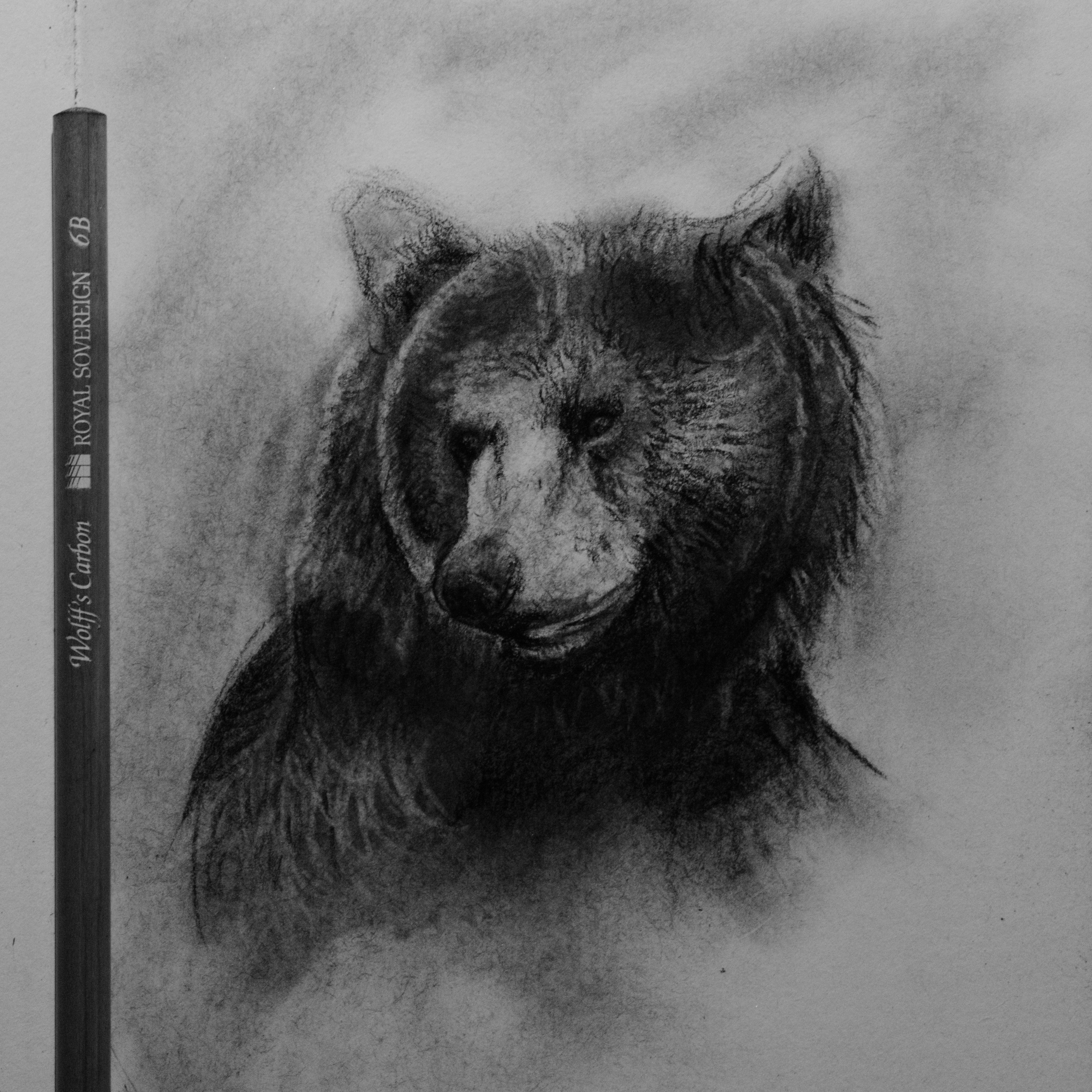 Sketch using carbon pencil and eraser only these sketches are a more of a way to capture the animals essence and not too concerned about high detail