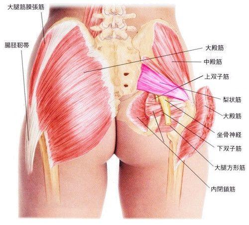 O脚を矯正するための骨盤周辺の筋肉を鍛える