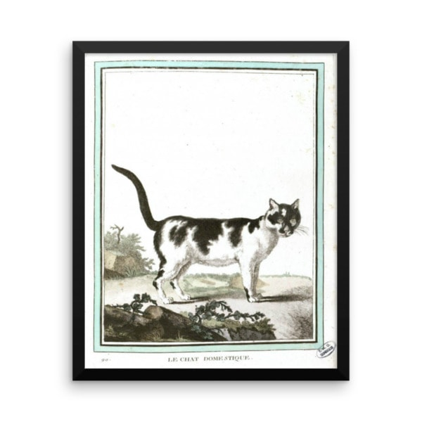 Georges LeClerc Buffon: Chat Domestique, 18th Century, Framed Cat Art Poster, 16×20