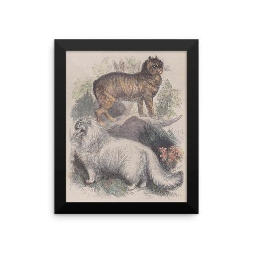 Manx and Angora Cats, Reprint from Rev. J.G. Woods Natural History of Animate Creation Mammalia, Vol. 1, 1853 at The Great Cat Store Rev. J.G. Wood: Manx and Angora Cats