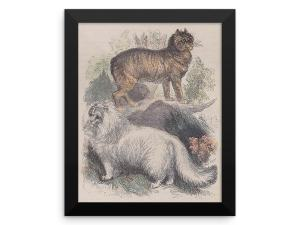 Manx and Angora Cats, Reprint from Rev. J.G. Woods Natural History of Animate Creation Mammalia, Vol. 1, 1853 at The Great Cat Store Rev. J.G. Wood: Manx and Angora Cats