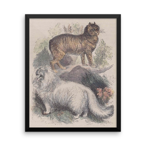 Manx and Angora Cats, Reprint from Rev. J.G. Woods Natural History of Animate Creation Mammalia, Vol. 1, 1853, 16×20