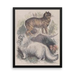 Manx and Angora Cats, Reprint from Rev. J.G. Woods Natural History of Animate Creation Mammalia, Vol. 1, 1853 at The Great Cat Store, CAT BREEDS