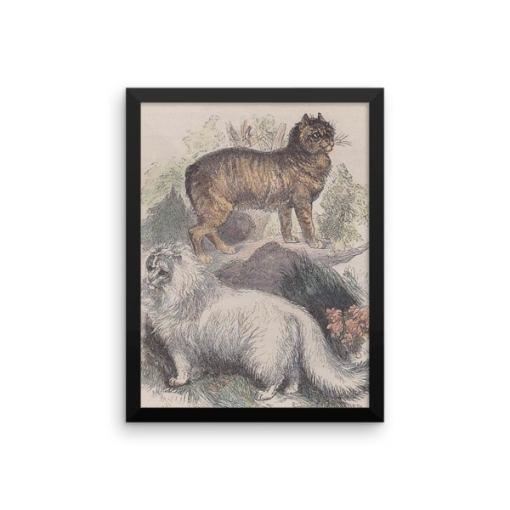 Manx and Angora Cats, Reprint from Rev. J.G. Woods Natural History of Animate Creation Mammalia, Vol. 1, 1853 at The Great Cat Store, Rev. J.G. Wood: Manx and Angora Cats