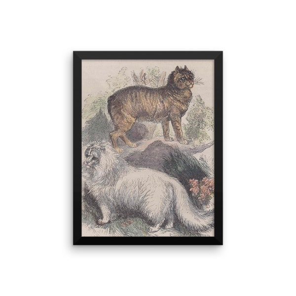 Manx and Angora Cats, Reprint from Rev. J.G. Woods Natural History of Animate Creation Mammalia, Vol. 1, 1853, 12×16