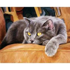 British Shorthair Cat DIY Acrylic Paint By Numbers Kit at The Great Cat Store